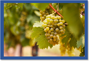 NEW GRAPE VARIETY NAMES APPROVED